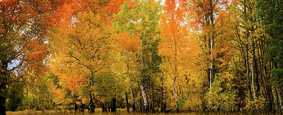 Autumn Near The Snake River Poster by TL Mair