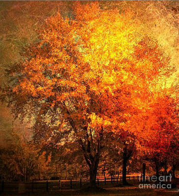 Autumn Oak Poster by Snook R