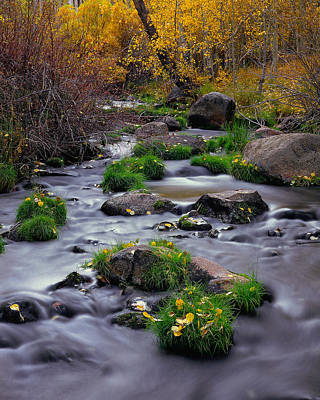 Autumn On Mill Creek Poster