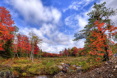 Poster featuring the photograph Autumn On The Stream by David Patterson
