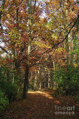 Autumn Path At St Croix Bluffs Poster