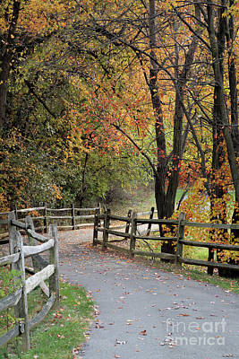 Autumn Path In Park In Maryland Poster