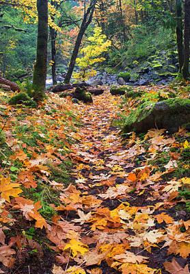 Autumn Path Poster by Mike  Dawson
