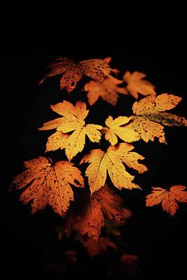 Autumn Photo Poster