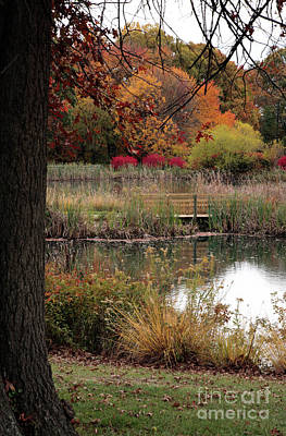 Autumn Pond In Maryland Poster