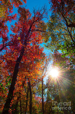 Autumn Pop Poster