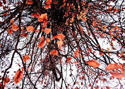Autumn Rain Poster