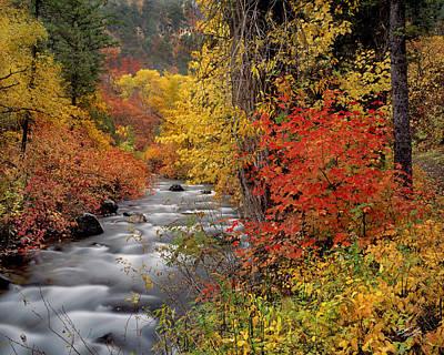 Autumn Rapids Poster