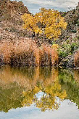 Autumn Reflection At Boyce Thompson Arboretum Poster