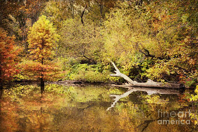 Autumn Reflection Poster by Cheryl Davis