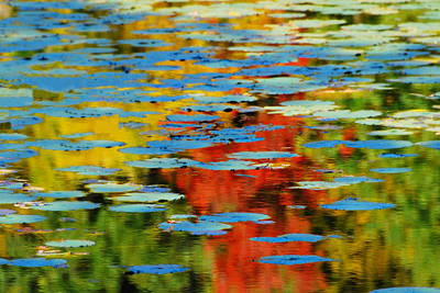Poster featuring the photograph Autumn Lily Pads by Diana Angstadt
