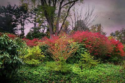 Autumn Settling In Poster