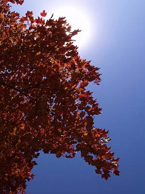 Autumn Sky I Poster by Anna Villarreal Garbis