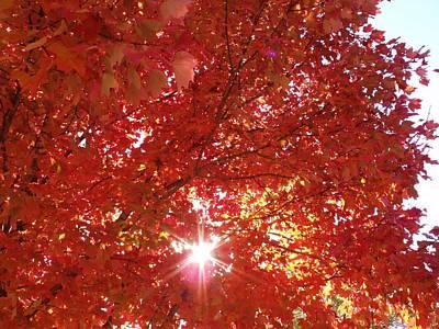 Autumn Sky IIi Poster by Anna Villarreal Garbis