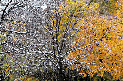 Poster featuring the photograph Autumn Snow by Doris Potter