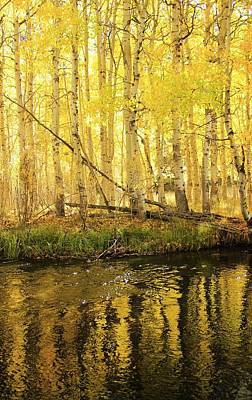 Autumn Soft Light In Stream Poster