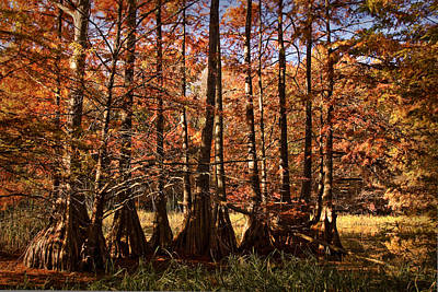 Poster featuring the photograph Autumn Splendor At Lake Murray by Tamyra Ayles