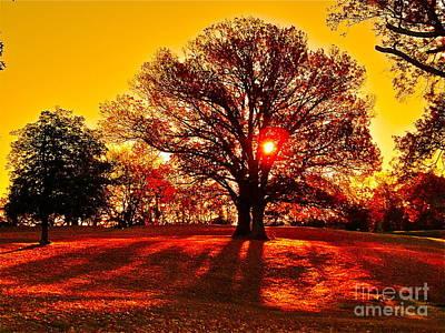 Autumn Sun And Shadows Poster by E Robert Dee