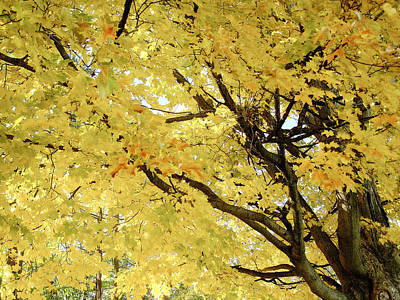 Poster featuring the photograph Autumn Tree by Raymond Earley