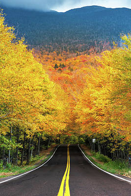 Autumn Tree Tunnel Poster