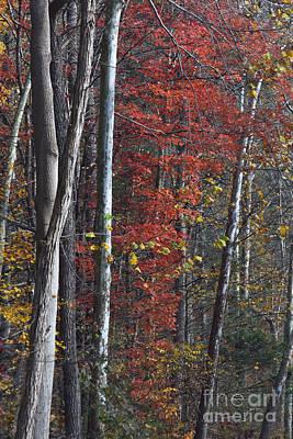 Autumn Trees 8261c Poster