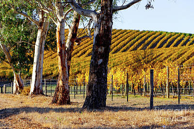 Poster featuring the photograph Autumn Vines by Bill Robinson