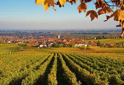 Autumn Vineyard  Pfaizerwald Region Germany Poster