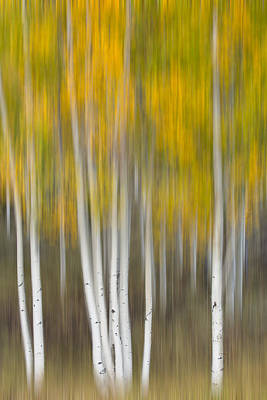 Poster featuring the photograph Autumn Was A Blur by Patricia Davidson