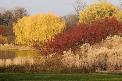 Autumn Willow Trees Poster by Elvira Butler