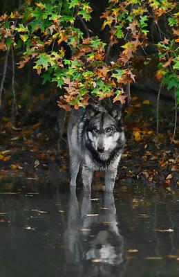 Poster featuring the photograph Autumn Wolf by Shari Jardina