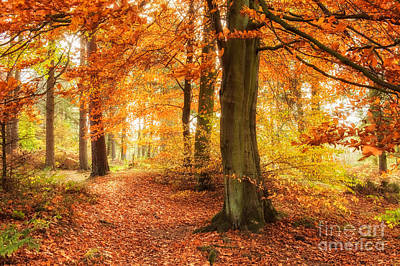 Autumn Woodland Poster by Janet Burdon