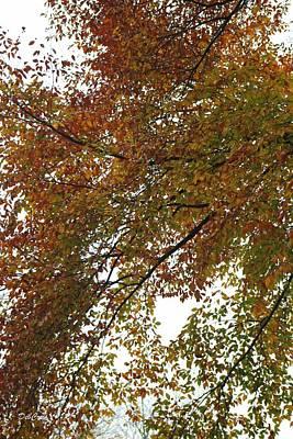 Autumn's Abstract Poster by Deborah  Crew-Johnson