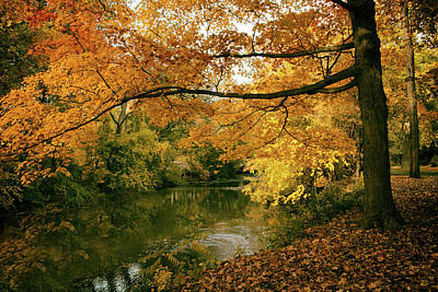 Poster featuring the photograph Autumn's Golden Tones by Jessica Jenney