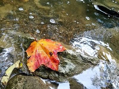 Autumns Last Stand  Poster by Scott D Van Osdol