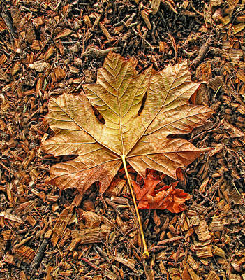 Autumn's Textured Maple Leaf Poster by Jennie Marie Schell