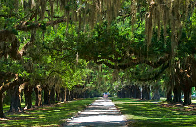 Avenue Of The Oaks At Boonville Plantation Poster