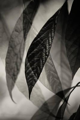 Avocado Leaves Poster by Bonnie Bruno