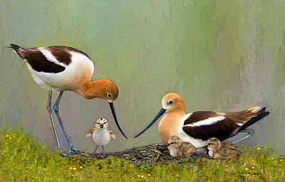 Avocet Family Poster