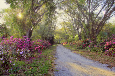 Azalea Lane By H H Photography Of Florida Poster
