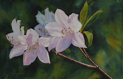 Poster featuring the painting Azaleas by Judy Mercer