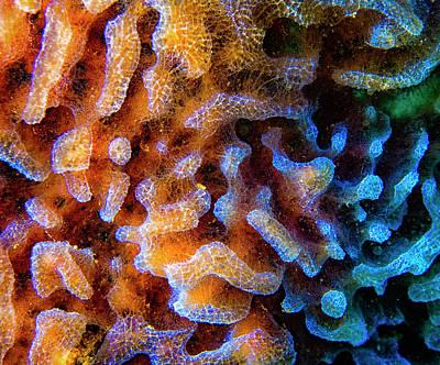 Azure Vase Sponge Close Up Poster by Jean Noren