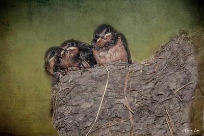Baby Barn Swallows Poster