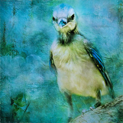 Baby Blue Jay Poster by Anna Louise