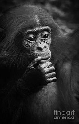 Baby Bonobo Poster by Helga Koehrer-Wagner