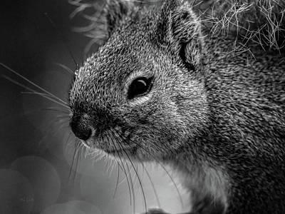 Baby Squirrel Poster by Bob Orsillo