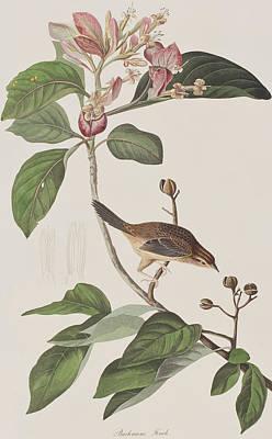 Bachmans Sparrow Poster by John James Audubon