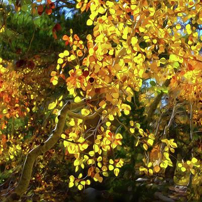 Back Lit Aspen Tree A Stylized Landscape By Frank Lee Hawkins Poster