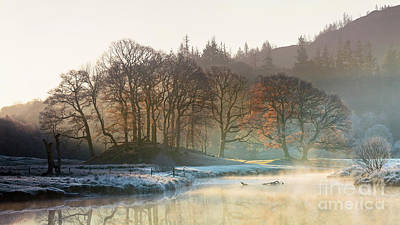 Backlit Trees On The River Brathay Poster by Tony Higginson