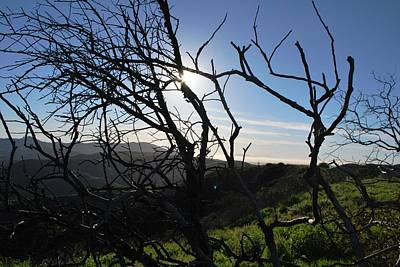Poster featuring the photograph Backlit Trees Overlooking Hillside by Matt Harang