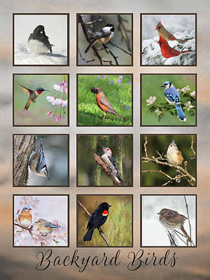 Backyard Birds Poster by Lori Deiter